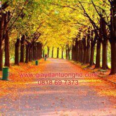 Mẫu tranh dán tường phong cảnh thiên nhiên-102