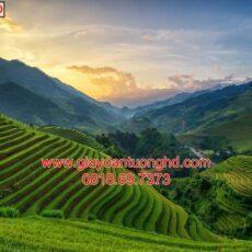 Mẫu tranh dán tường phong cảnh thiên nhiên-108