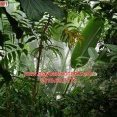 Mẫu tranh dán tường phong cảnh thiên nhiên-116