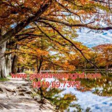 Mẫu tranh dán tường phong cảnh thiên nhiên-119