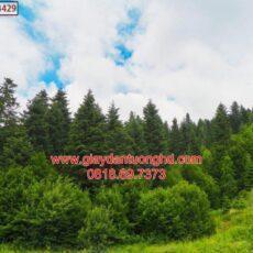 Mẫu tranh dán tường phong cảnh thiên nhiên-153
