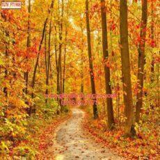Mẫu tranh dán tường phong cảnh thiên nhiên-43