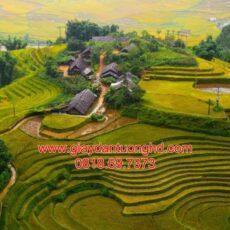 Mẫu tranh dán tường phong cảnh thiên nhiên-56